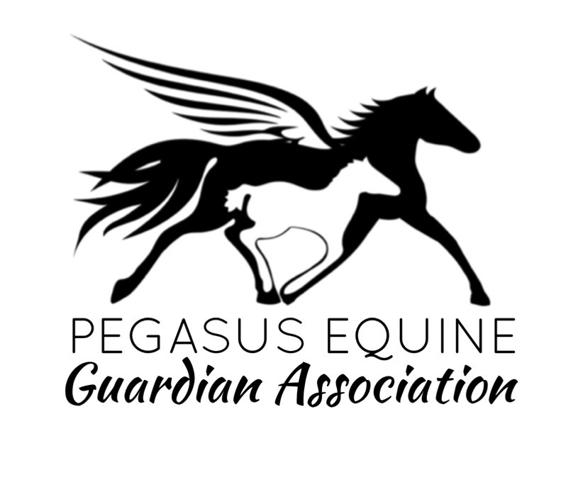 Pegasus Equine
